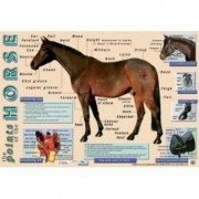 Points Of The Horse Wall Chart