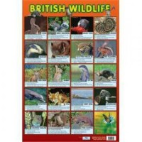 British Wildlife Wall Chart