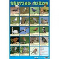 British Birds Wall Chart